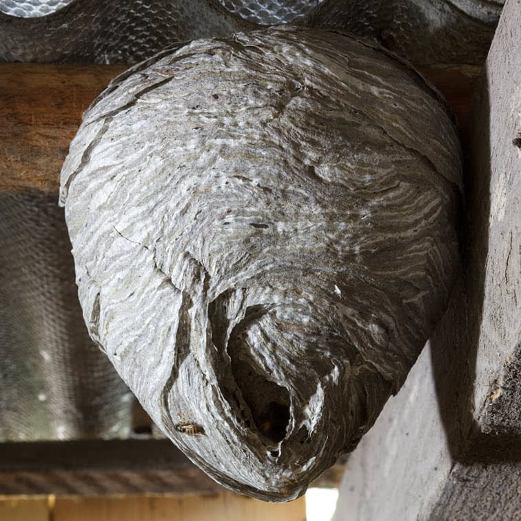 Close-up of a wasp nest