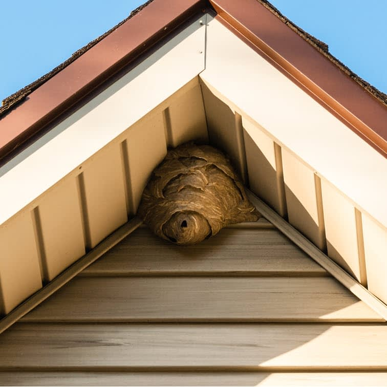 Photo of a wasp nest under eve of a house